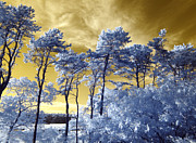 Infrared Photos - Cosmic by Luke Moore
