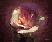 RC deWinter - Cosmic Rose