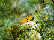 Layered Prints - Cosmos Sharing Its Beauty Print by J Larry Walker
