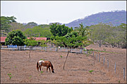 Allan Einhorn - Costa Rica Countryside