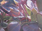 Translucent Paintings - Cotinus in Summer by Patricia Devitt