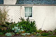 Turf Art - Cottage garden by Tom Gowanlock