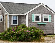 Michelle Wiarda - Cottage on the Cape