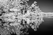 Tree Leaf On Water Photo Prints - Cottage reflection - infrared Print by Nicole Couture-Lord