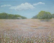 Cotton Fields Posters - Cotton Field Poster by Jean Ehler