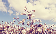 Arkansas Photos - Cotton in the Sky by Scott Pellegrin