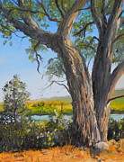Todd Derr - Cottonwood And Wind River