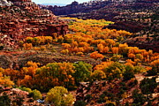 Autumn Photographs Framed Prints - Cottonwood Canyon Framed Print by Aidan Moran