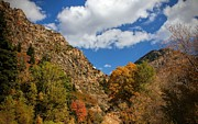 Tracie Kaska - Cottonwood Canyon Autumn...