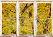 Window Frame Framed Prints - Cottonwood Fall Foliage Colors Rustic Farm Window View Framed Print by James Bo Insogna