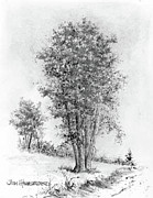 Midwest Drawings - Cottonwood by Jim Hubbard
