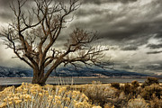 Janis Knight - Cottonwood on Washoe Lake