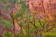 Zion National Park Framed Prints - Cottonwoods-Zion Canyon Framed Print by Stephen  Vecchiotti