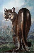 Wildcats Paintings - Cougar by Esther Hinchliff