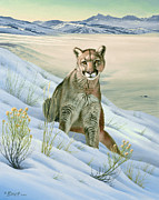 'cougar In Snow' Print by Paul Krapf