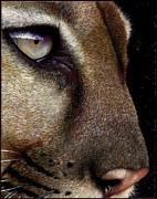 Cougar Print by Jurek Zamoyski
