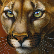 Wild Cats Originals - Cougar October 2011 by Jurek Zamoyski