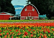 Skagit Valley Posters - Country Charm Poster by Benjamin Yeager