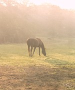 Grazing Horse Posters - Country Dawn Poster by Amy Porter