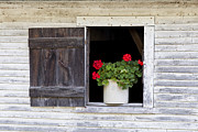 Red Geraniums Prints - Country Elegance Print by Alan L Graham