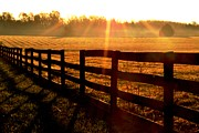 Wellspring Prints - Country Fence Print by Carlee Ojeda