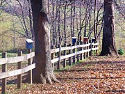 Photos Of Autumn Prints - Country Fence Print by Dave Dresser