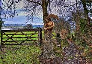 Country Lanes Metal Prints - Country Girl Metal Print by Alex Hardie