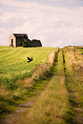 Flying Photos - Country Lane by Christopher and Amanda Elwell