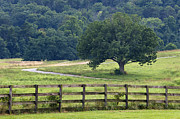 Board Fence Prints - Country Lane - D008558 Print by Daniel Dempster