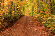 Yellow Leaves Prints - Country Lane in Autumn Print by Matt Dobson