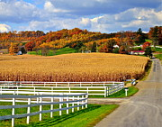 Amish Family Art - Country Lane by Robert Harmon
