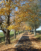 Kentucky Horse Park Framed Prints - Country Lane Framed Print by Roger Potts