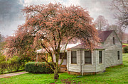 Tree Blossoms Prints - Country Pink Print by Debra and Dave Vanderlaan