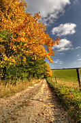 Fall Road Posters - Country Road And Autumn Rural Landscape Poster by Michal Boubin