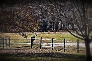 JW Hanley - Country Road Fence