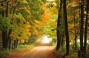 Autumn Trees Metal Prints - Country Road in Autumn Metal Print by Terri Gostola