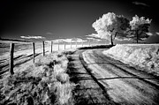 Dan Carmichael - Country Road in the Blue...