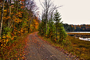 Green Leafs Posters - Country Road in the Fall Poster by David Patterson