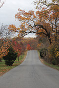 Renee Braun - Country road of fall