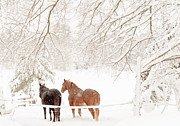 Cheryl Baxter Metal Prints - Country Snow Metal Print by Cheryl Baxter