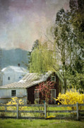 Weeping Willow Photos - Country Spring Cottage by Kathy Jennings