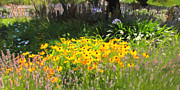 Countryside Cottage Garden 5d24560 Long Print by Wingsdomain Art and Photography