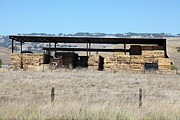 Dilapidated House Photos - Countryside Haystacks in Petaluma California 5D24428 by Wingsdomain Art and Photography