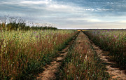 Summer Sun Photos - Countryside tracks by Carlos Caetano