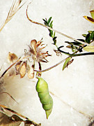Nature  - County Botanicals by Pamela Patch