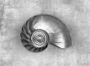 Seashell Photos - Couplet in Black and White by Chrystyne Novack