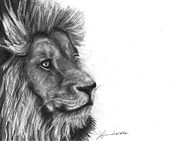Brown Hair Drawings Posters - Courage Of A Lion Poster by J Ferwerda