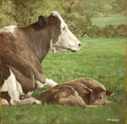 Sleeping Cows Prints - Cow And Calf In Field Print by Martin Davey