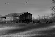 EricaMaxine  Price - Cow Barn
