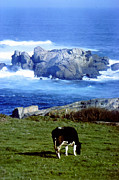 Hugh Peralta - Cow Grazing By The O...